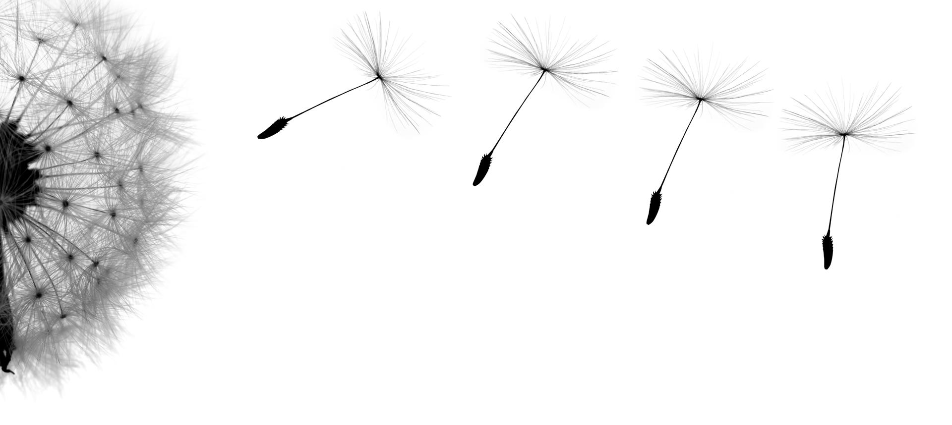 dandelions approach